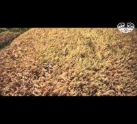 AchtVier - Für Dich (Album Wohlstand VÖ 01.08.2014)