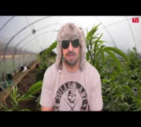 Alaskan Thunder Fuck - Dr GreenThumb Strain Review | BREAL.TV