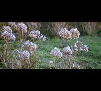 Chakuza - Faden verloren (Offizielles Video)