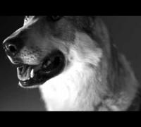Chakuza & RAF Camora feat Joshi Mizu - BOMBE (Official Video)
