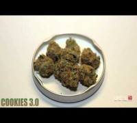 Cookies 3.0 - Dr. Greenthumb Strain Review