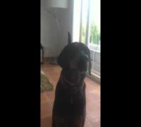 Der Atzen-Hund! Oki ist 100% ATZE!