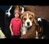 Der Hundeschläger von Facebook - Blumio Rap da News Episode 71