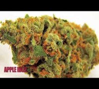 Dr GreenThumb Strain Review - Apple Haze | BREAL.TV