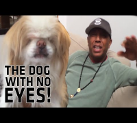 Inside ADD:  This Dog Has No Eyes!