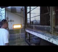 Milonairs Ansage - VVK von Russisch Roulette BABO EDT.