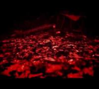 Separate Wahrheit Trailer