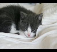 Süße Katze schläft ein