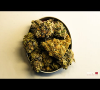 Sunset Sherbert - Dr. Greenthumb Strain Review