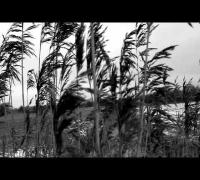 Taichi - Phantomschmerz (Official Video) Vergebung EP - taichi-musik.de