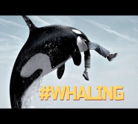 #WHALING - Whaling is the new trending CRAZE on VINE! (Compilation)